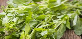 Holy Basil Benefits For Your Health, Skin, And Hair