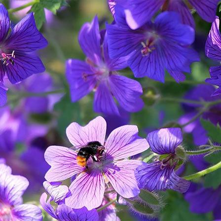 violet flower pinit