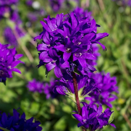 50 most beautiful flowers in the world violet flowers pinit mightylinksfo
