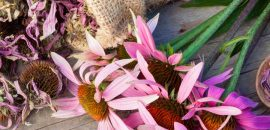9 Amazing Benefits Of Echinacea For Skin, Hair And Health