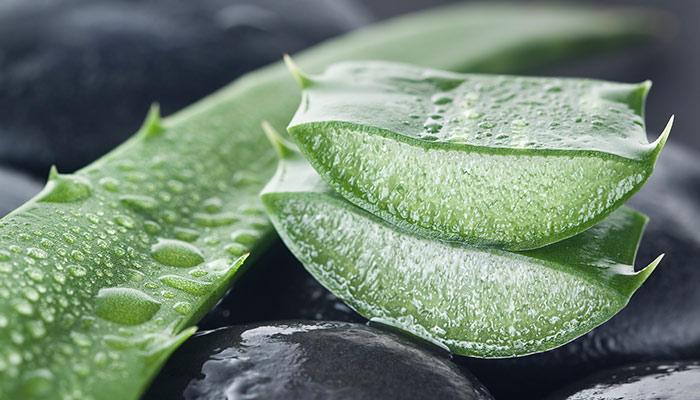 9. Aloe Vera For Cellulite