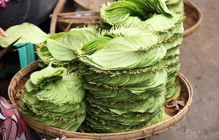 benefits of betel leaf
