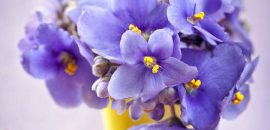 Top 10 Most Beautiful Violet Flowers