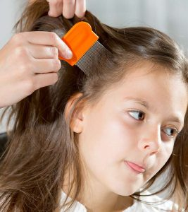 How To Use Olive Oil To Treat Head Lice