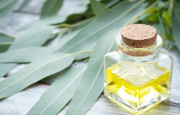16.-Eucalyptus-Oil-For-Cold-Sores